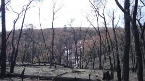 La foret ravagee par un incendie