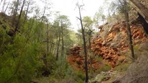 La forêt perdue - Alligators Gorges