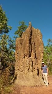 Les termitieres cathédrales