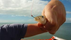 Premier jour de pêche et premiers emois