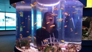Aquarium à Townsville