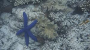 Le reef à Cape Tribulation